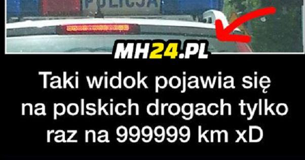 Bardzo rzadki widok w Polsce