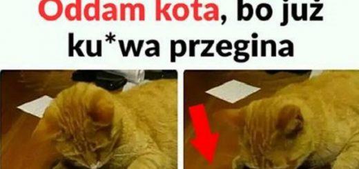 Oddam kota... Obrazki
