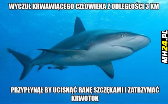 Dobry ziomek rekin Obrazki