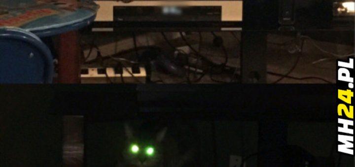 Naładowany kot Obrazki