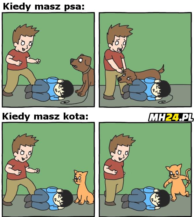 Różnica między psem a kotem Obrazki