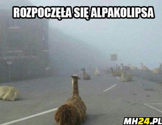 Alpakolipsa