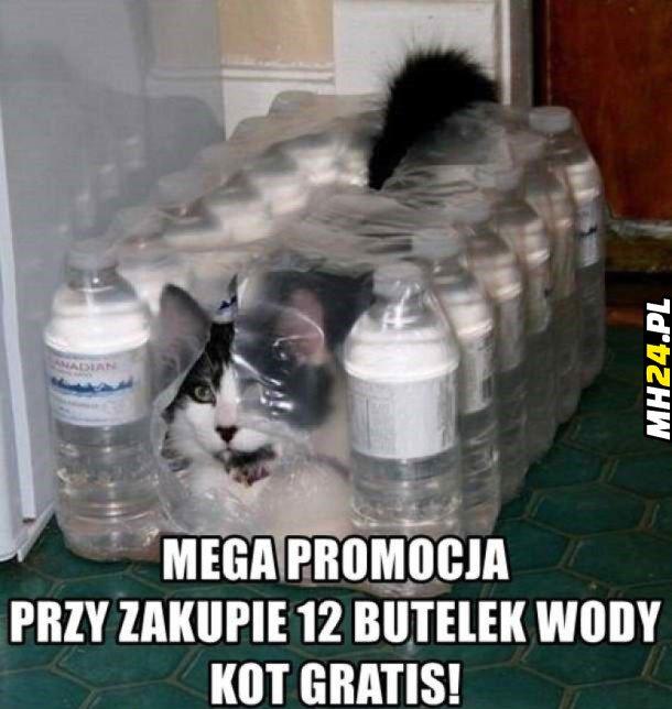 Kot gratis Obrazki