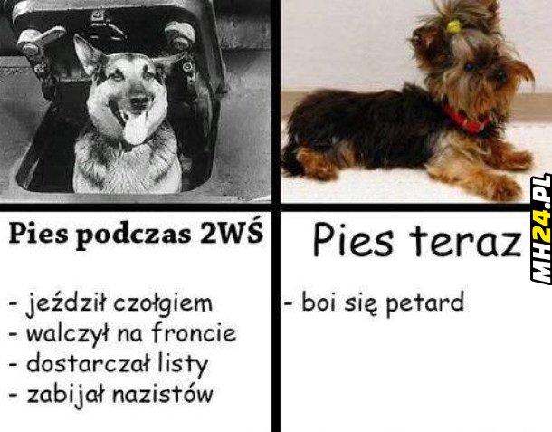 Pies podczas 2WŚ i teraz Obrazki