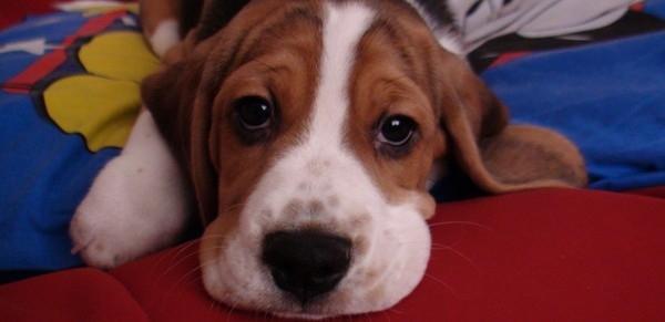 Dziewczyna kazała mu pozbyć się psa. Zamieścił więc w internecie TO GENIALNE ogłoszenie!
