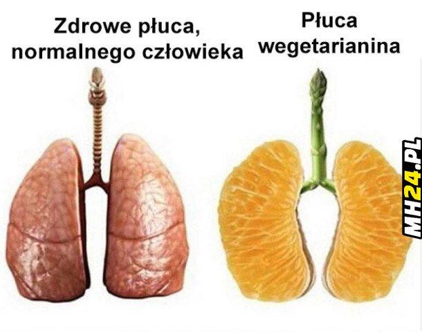 Płuca wegetarianina