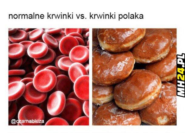 Krwinki Polaka