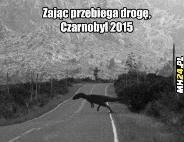 Zając z Czarnobyla