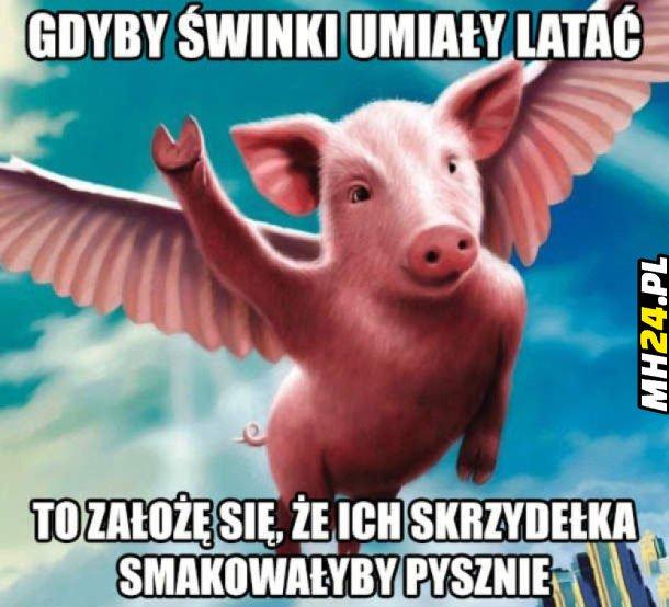 Gdyby świnki umiały latać…