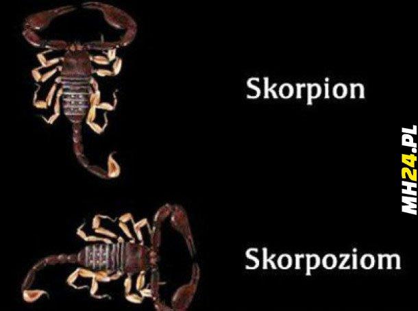 Skorpion Obrazki