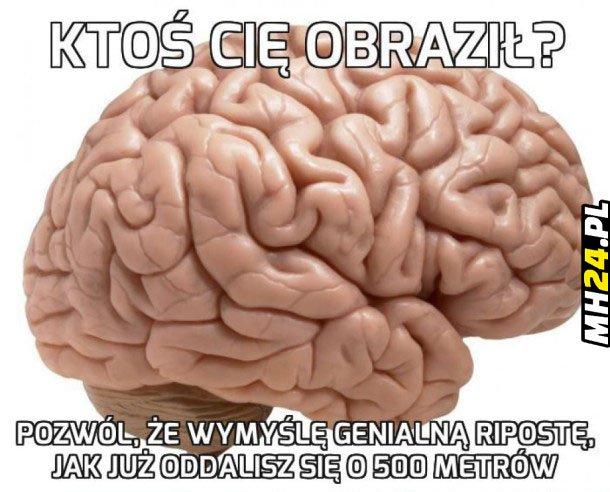 Logika mózgu….