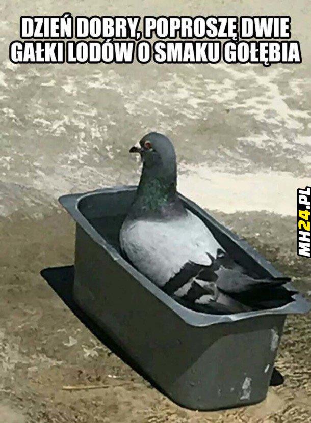 Lody o smaku gołębia