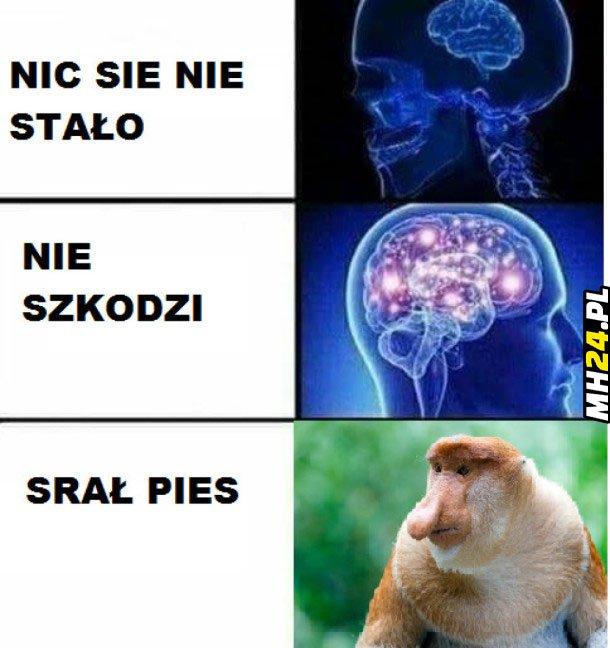 Srał pies Obrazki