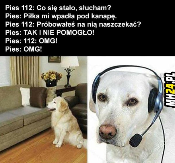 Psia rozmowa
