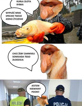 Janusz i złota rybka