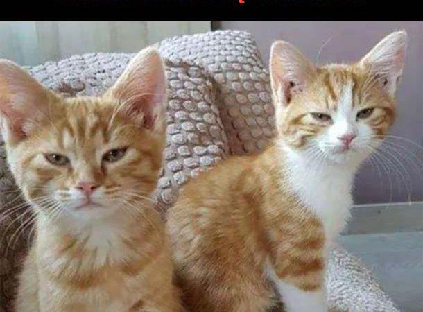 Kąpiel dla kotów xD