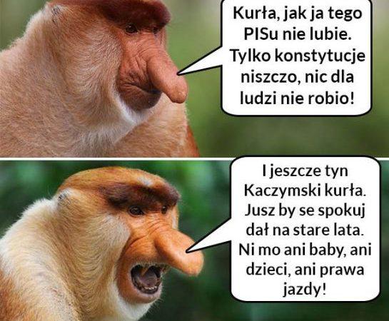 Typowy Janusz narzekający na rząd xD