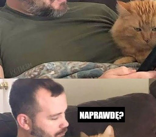 Koty w internecie :D